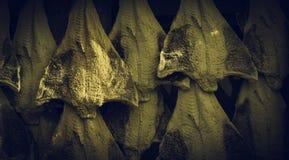 Рыбозавод посоленной трески стоковая фотография