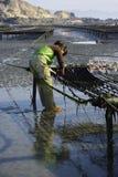 Рыбозаводы моря стоковые изображения rf