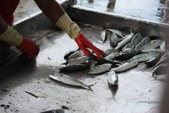 Рыбозавод стоковые изображения