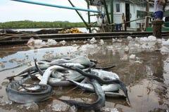 Рыбозавод стоковые фотографии rf