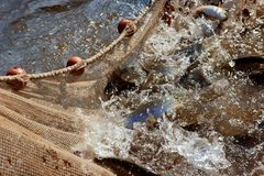 рыболовная сеть стоковое изображение