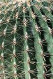 рыболовный крючок кактуса бочонка Стоковое Изображение