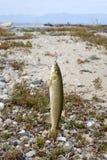 рыболовный крючок Стоковая Фотография RF