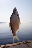 рыболовный крючок Стоковые Фотографии RF