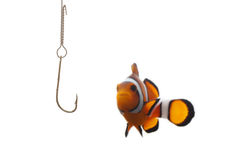 рыболовство клоуна стоковая фотография rf