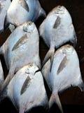 рыболовство предпосылки Стоковое Изображение