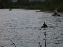 Рыболовы наблюдая лося пересекают русское реку в весеннем времени