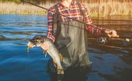 Рыболов в красной рубашке уловил судака в пресноводном пруде стоковое фото rf