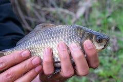 Рыболов держа рыб стоковые фото