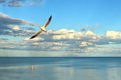 Рыболов wading в океане пока чайка витает в прошлом Стоковое Изображение RF