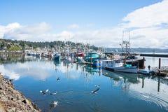 Рыбопромысловый флот промышленного рыболовства причаленный на порте Ньюпорта Орегона Стоковое Изображение RF