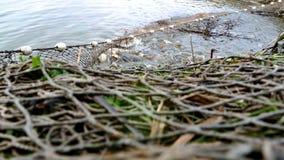 Рыболовная сеть в пруде видеоматериал