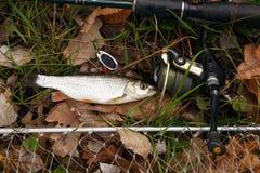 Рыболовные снасти на деревянной поверхности. стоковое изображение