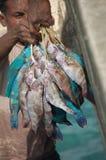 Рыболовы в западной Папуа принимая рыб из их шлюпки Стоковое фото RF