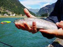 Рыболов держа рыбу радужной форели Стоковые Изображения RF