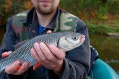 Рыболов с голавлем стоковое фото rf