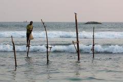 Рыболов ходулей стоковые фото