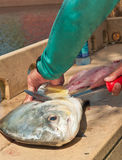 Рыболов filleting рыба разрешения Стоковые Фотографии RF