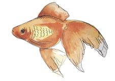 Рыбы акварели Стоковые Фотографии RF