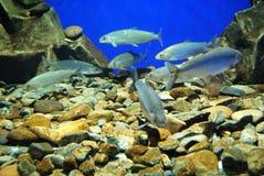 рыбы аквариума близкие вверх Стоковое Изображение