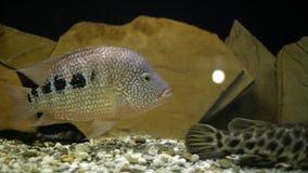 Рыбы аквариума в аквариуме видеоматериал