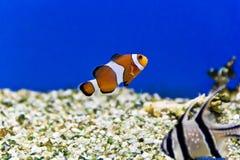 Рыбы аквариума в соленой воде стоковое изображение rf