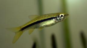 рыбы аквариума рисуют бак Стоковые Фото