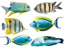 рыбы аквариума цветастые Стоковые Изображения