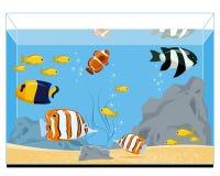 рыбы аквариума экзотические Стоковая Фотография