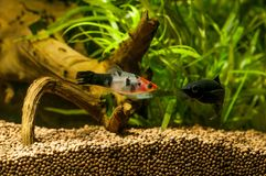 Рыбы аквариума Colorfull стоковая фотография