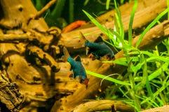 Рыбы аквариума Colorfull стоковое изображение rf