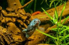 Рыбы аквариума Colorfull стоковые фото