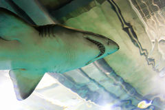 Рыбы акулы - Барселона Стоковое фото RF