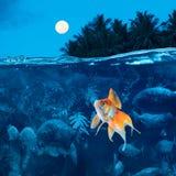 рыбы Амазонкы меньшее река ночи бессонное Стоковое фото RF