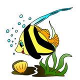 рыбы ангела Стоковое Изображение