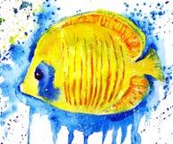 Рыбы бабочки акварели Стоковая Фотография