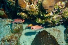 Рыбы белки Стоковые Фотографии RF