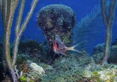 Рыбы белки Стоковые Фото