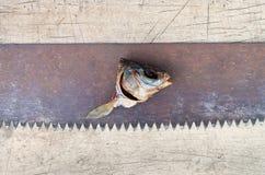 Рыбы высушенные головой Стоковые Фото