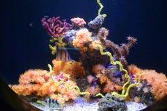 Рыбы в аквариуме в Франции Стоковые Изображения