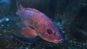 Рыбы в аквариуме видеоматериал