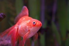 Рыбы в аквариуме Стоковое фото RF