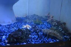 Рыбы в баке Стоковое Изображение RF