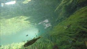 Рыбы в видео запаса озера видеоматериал