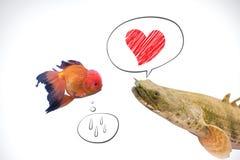 Рыбы в влюбленности Стоковое Изображение RF