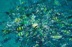 Рыбы в голубой воде стоковая фотография