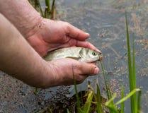 Рыбы в ладонях ` s человека стоковые изображения