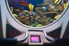 Рыбы в окне подводной лодки Стоковая Фотография