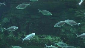 Рыбы в подводном гроте видеоматериал