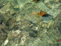 Рыбы в прозрачной морской воде Стоковые Изображения